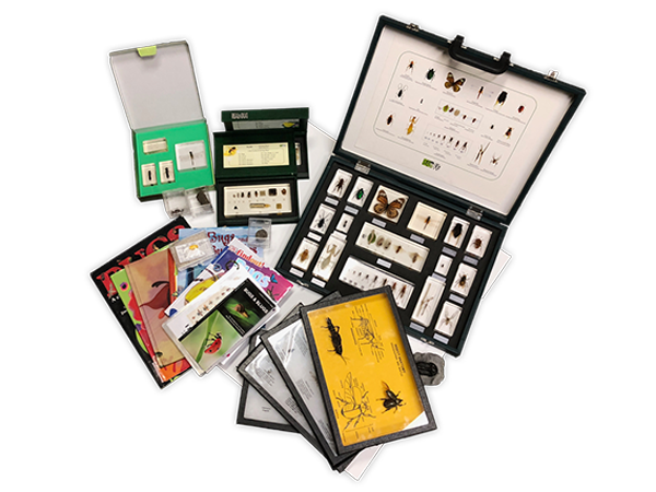 Insects Loan Kit