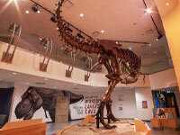 CN T.rex Gallery